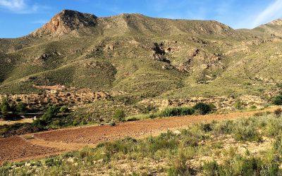 Plantación del Grupo Operativo TURMICULTURA en Águilas (Murcia)
